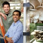 Grow Gourmet Mushrooms On Recycled Coffee Grounds!