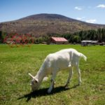 Woodstock Sanctuary Opens Eco-Friendly B&B!