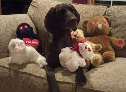 Glad Dogs Nation receives donations of stuffed toys through the efforts of caring individuals and businesses, community groups, schools, Girl/Boy Scouts, and others.