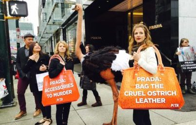 PETA Checkmates Prada By Becoming A Shareholder In The Company