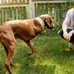 The Beautiful and Amazing One-Legged Dog Adoption Story That Came From A Listing On Our Newsletter