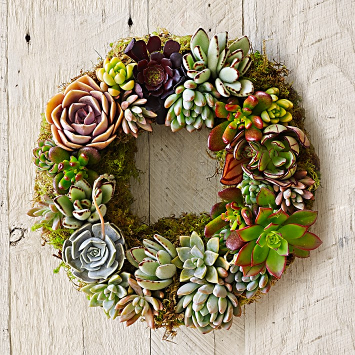 Mixed Succulent Wreath, $109 @williams-sonoma.com