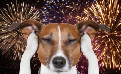 Avoiding July 4th's Puppy Pitfalls/ Image via Happy Hound