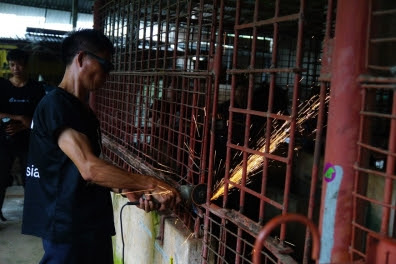 Cages that were never meant to be opened are cut by Animals Asia.