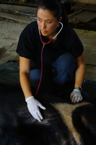 Animals Asia Senior Veterinarian Mandala Hunter performs a health check on Kim bear.