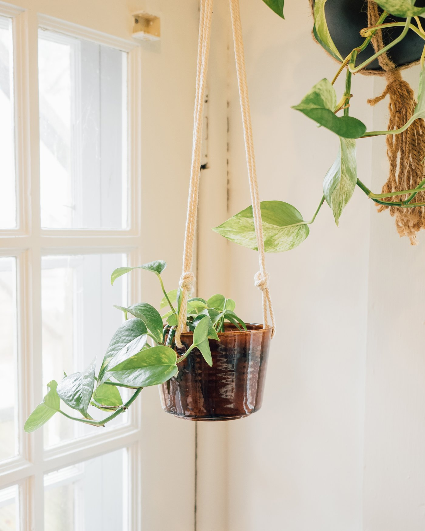 Hanging Planter: Sweet Tea, $44 @mudlove.com
