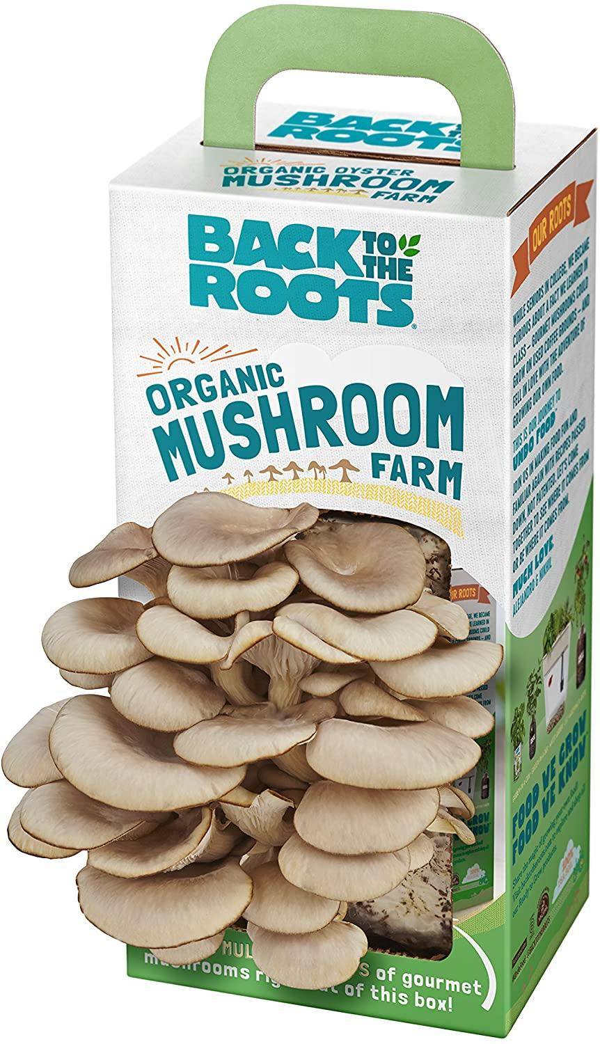 Back To The Roots Organic Mushroom Growing Kit, $33 @amazon.com (Harvest Gourmet Oyster Mushrooms In 10 days)