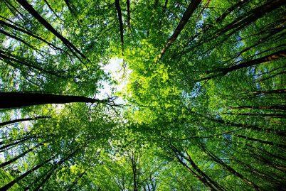 Coronavirus May Very Well Green The World