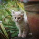 What to Do When You See Baby Kittens in Your Backyard
